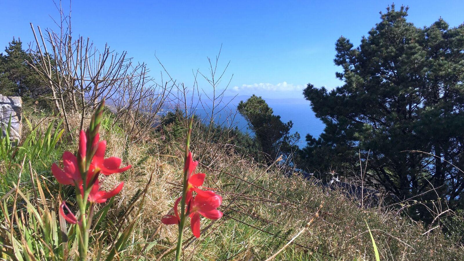 red flowers meadow (1)